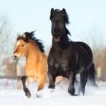 Two horses run in winter — Stock Photo