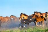 Herd of horses runs in pasture in summer — Stock Photo