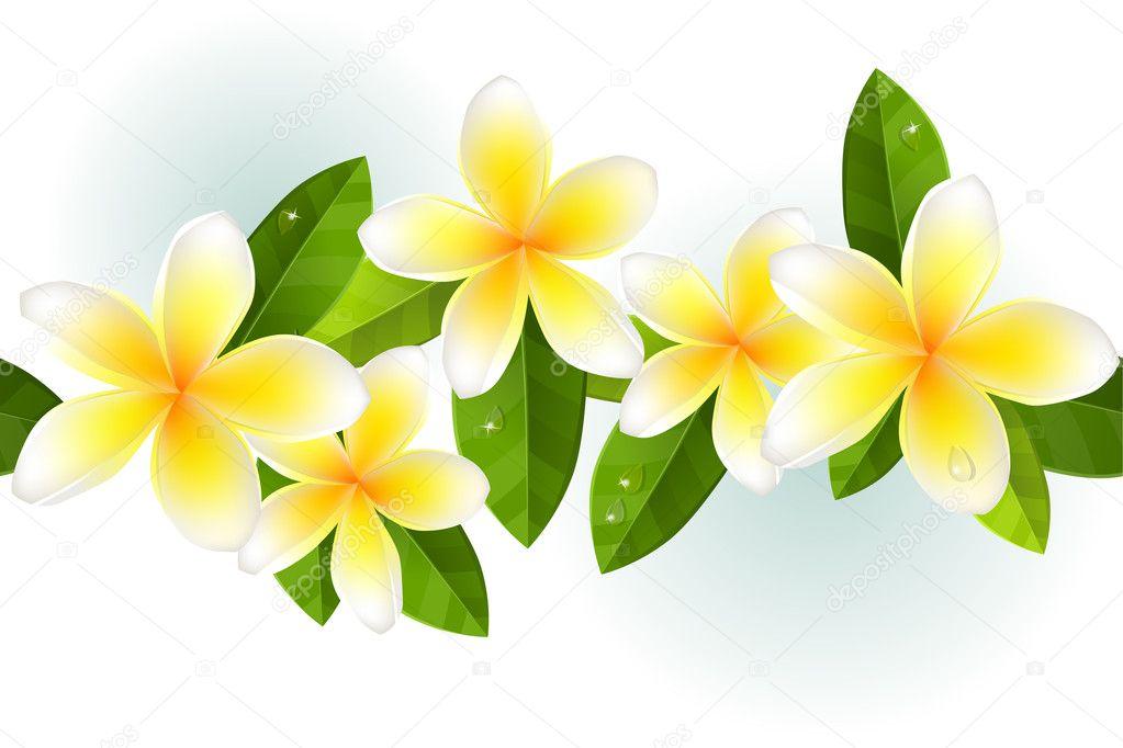 素馨花,树叶和露水中无缝边框
