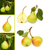 Pears collage — Stock Photo