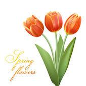 Realistic tulips bouqet — Stock Vector