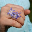 Wedding ring with flowers a primrose — Stock Photo #1309898