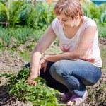 Frau, die Arbeit in ihrem Garten — Stockfoto