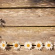 Chamomile on wooden background — Stock Photo
