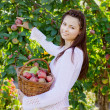 Girl with a basket of apples — Stock Photo