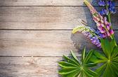 Vackra lupiner på trä bakgrund — Stockfoto