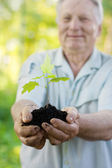 Old men with plant outdoor — Stock Photo