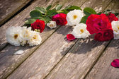 Red and white rose on wooden background — Stock Photo