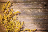 Yellow flowers on wooden background — Stock fotografie