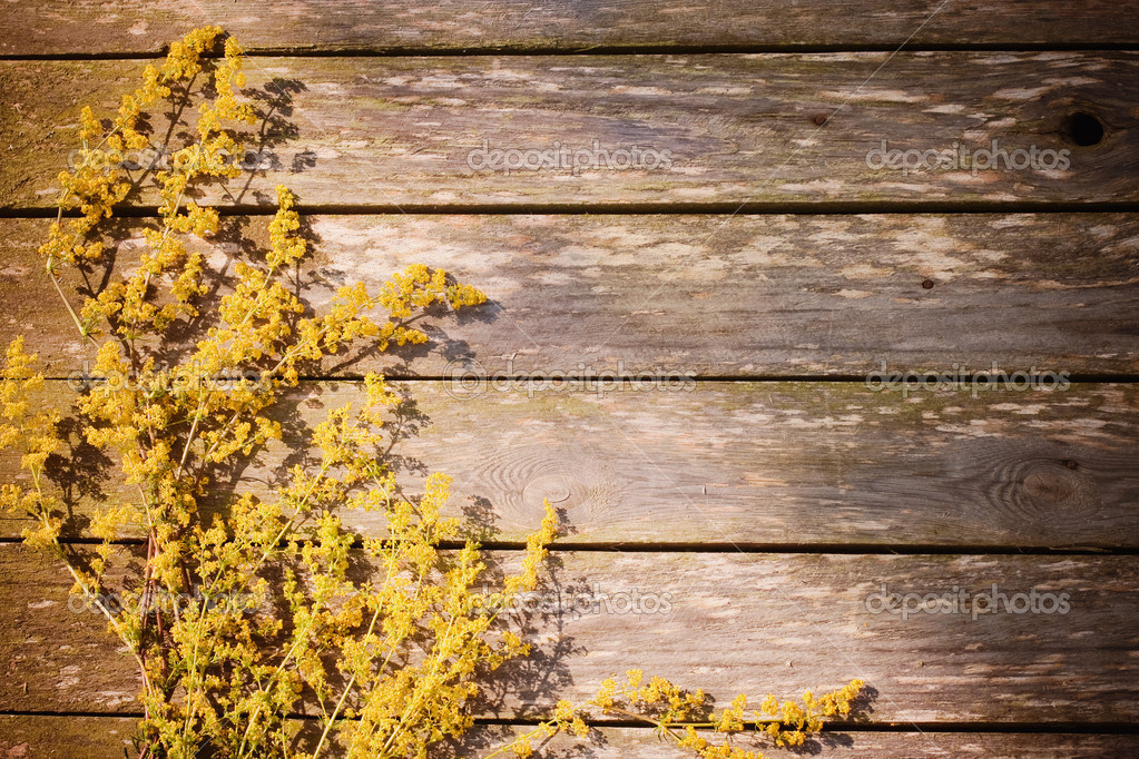 Yellow flowers on wooden background — Stock Photo #12585185