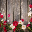 Roses on wooden background — Stock Photo