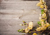 Spring flowers on wooden background — Stock fotografie