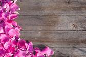 Roze bloemblaadjes op houten achtergrond — Stockfoto