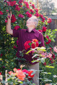 Old men with rose in garden — Stock Photo