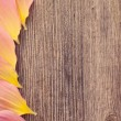 Royalty-Free Stock Photo: Petals on wooden background