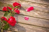 Rosa sobre fundo de madeira — Foto Stock