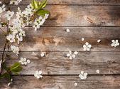 Fleurs de printemps sur fond en bois — Photo