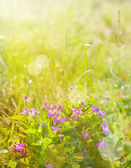 Beautiful flowers in sunny light — Stock Photo