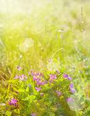 Vackra blommor i soliga ljus — Stockfoto