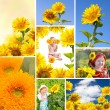 Collage with sunflowers — Stock Photo #23600883
