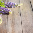Beautiful lupines on wooden background - Foto de Stock