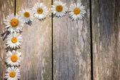 Chamomile on wooden background — Stock Photo