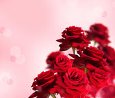 Red rose on pink background — Stock Photo