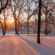 Stock Photo: Winter sunset