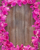 Pink petal on wooden background — Stock Photo