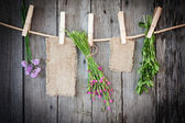 Medicine herbs and paper attach to rope with clothes pins on wooden background — Stock Photo