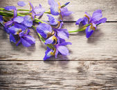 Flowers on white wooden background — Stock Photo