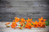 Lily on wooden background — Stock Photo