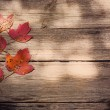 Autumn leaves over wooden background — Stock Photo #31293969