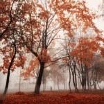 Autumn park — Stock Photo #31696257