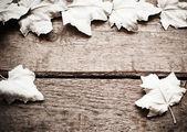 White leaves on wooden background — Foto de Stock