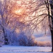 Beautiful winter morning — Stock Photo