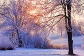 美丽的冬天的早晨 — 图库照片