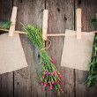 Foto de Stock  : Medicine herbs and paper attach to rope with clothes pins on woo