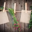 Medicine herbs and paper attach to rope with clothes pins on woo — Photo #37062087