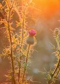 Pflanzen im sonnigen licht — Stockfoto
