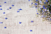 Blue spring flowers on wooden background — Stockfoto