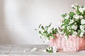 Jasmine in basket on white background — Stock Photo