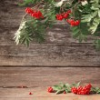 Stock Photo: Ashberry on wooden background