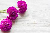Krásný jarní květiny na dřevěné pozadí — Stock fotografie