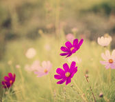 Beautiful pink flowers — Стоковое фото