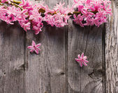 Beautiful spring flowers on wooden background — Stock Photo