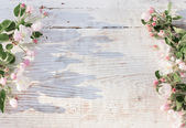 Spring flowers white wooden background — Stock Photo