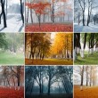 Park in different seasons — Stock Photo
