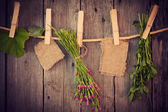 Medicine herbs and paper attach to rope with clothes pins on woo — Stock Photo