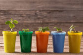 Young plants  in pots on wooden background — Stock Photo